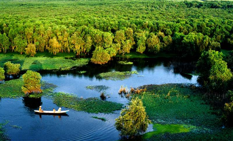 Tra Su Cajuput Forest